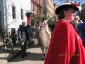 llamas-join-the-parade-22